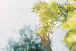 融ける春の写真・画像素材[1853020]