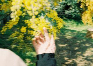 掌に春をの写真・画像素材[1975138]