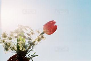 春色が霞む時間の写真・画像素材[1975146]