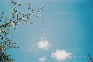 初夏のの写真・画像素材[2095157]