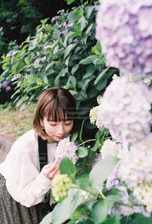 紫陽花の写真・画像素材[2293336]