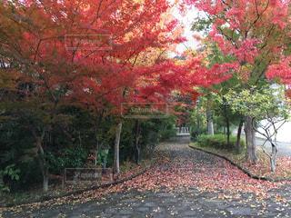 風景 - No.258471