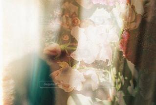 花の写真・画像素材[1752434]