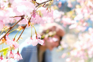 桜の季節の写真・画像素材[1881074]