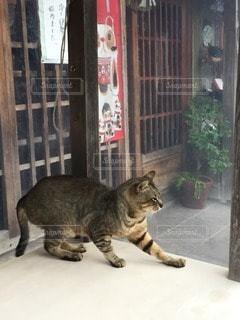 猫の写真・画像素材[63786]