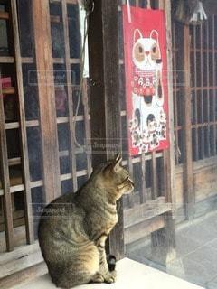 猫の写真・画像素材[69405]