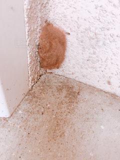 家の外を掃除していたらコウモリが寝ていてびっくり❗️の写真・画像素材[1755780]