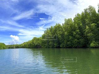 マングローブジャングルの川の写真・画像素材[1755026]