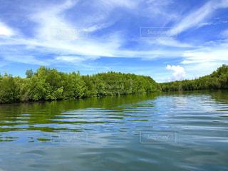 マングローブジャングルと川の写真・画像素材[1755027]
