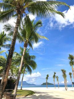 ヤシの木とビーチの写真・画像素材[1755033]