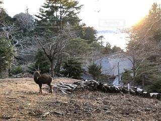 鹿と夕焼け空の写真・画像素材[1756314]