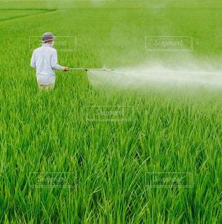 稲の消毒の写真・画像素材[1756616]
