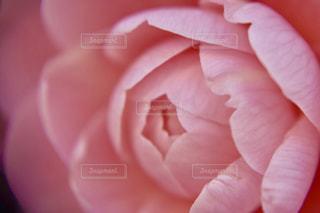 花を持っている手の写真・画像素材[1822534]
