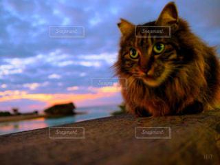 沖縄の海と猫 夕焼けの写真・画像素材[1757385]