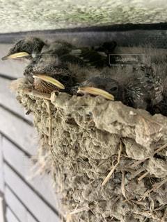 鳥のクローズアップの写真・画像素材[2437946]