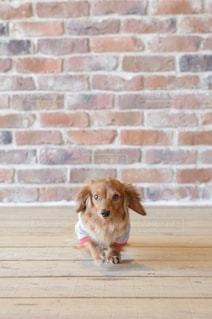 犬猫イベントの撮影会の写真・画像素材[2739667]
