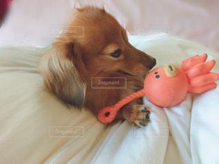 寝起きでおもちゃと一緒にの写真・画像素材[2763093]