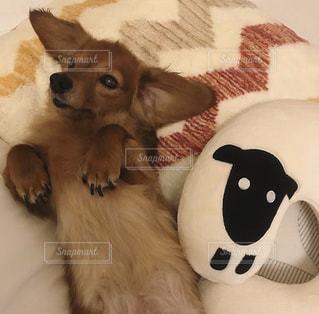 犬の隣にカワイイヒツジのクッションの写真・画像素材[2814200]