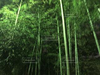 竹林の写真・画像素材[2505167]