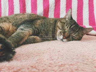 昼寝中の猫の写真・画像素材[2747586]