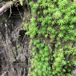 苔の風景の写真・画像素材[1764619]
