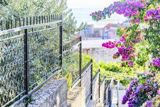 紫色の花を持つ門の写真・画像素材[2333610]