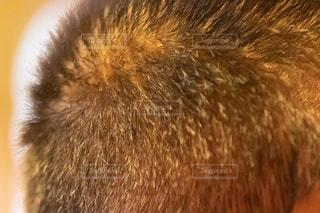 髪のクローズアップの写真・画像素材[2338600]