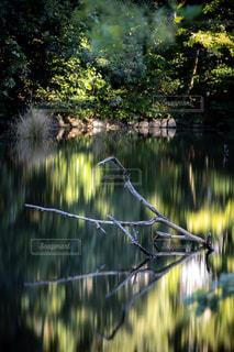 池の近くにの写真・画像素材[2698769]
