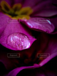 紫色の花のクローズアップの写真・画像素材[2879346]