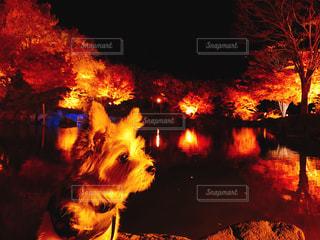 紅葉と犬の写真・画像素材[1760370]