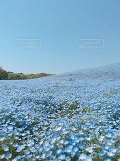 青の絨毯の写真・画像素材[1760423]