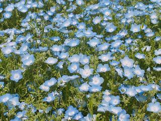 青の絨毯の写真・画像素材[1760424]