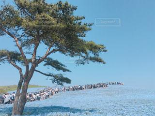ネモフィラに並ぶ人々の写真・画像素材[1760425]