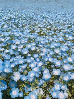 青の絨毯の写真・画像素材[1760426]