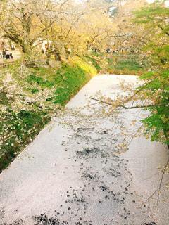桜の川。の写真・画像素材[1760431]