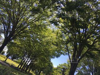 日曜日に公園への写真・画像素材[1760432]