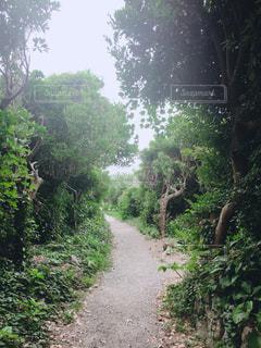 森の中の土の道の写真・画像素材[1760489]