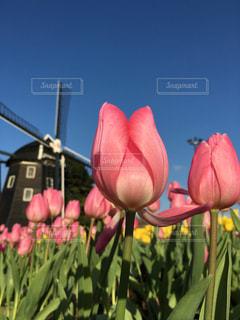 近くの花のアップの写真・画像素材[1760707]