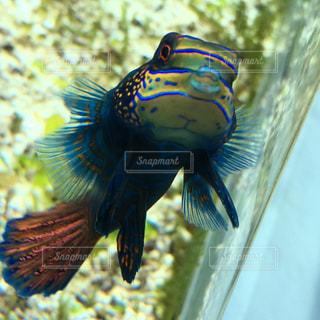 お洒落な魚の写真・画像素材[1760745]