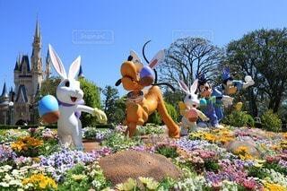 花の写真・画像素材[63743]