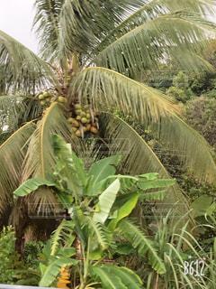 ツリーの横にあるヤシの木のグループの写真・画像素材[1761843]