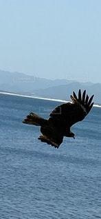 水の体の上を飛んでいる鳥の写真・画像素材[3302223]