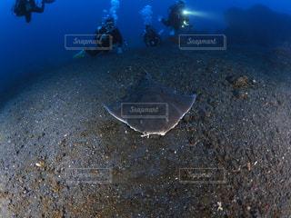 ドチザメ接近の写真・画像素材[1761817]