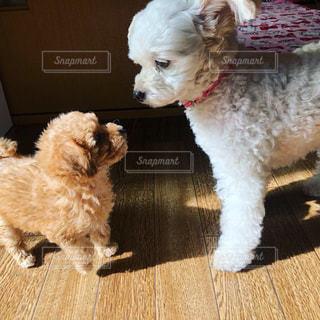我が家の愛犬♡の写真・画像素材[1762634]
