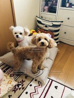 犬の隣に座っているぬいぐるみの動物のグループの写真・画像素材[1876751]
