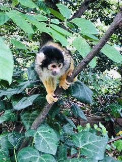 枝に座っている猿の写真・画像素材[2133048]