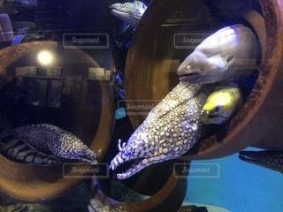 魚のクローズアップの写真・画像素材[2273208]