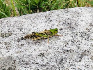 岩の上に座っているカエルの写真・画像素材[2277320]