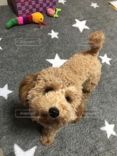 ぬいぐるみの上に横たわる犬の写真・画像素材[2507667]