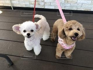 犬の写真・画像素材[2595811]